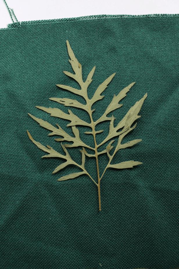 pressed leaf used for leaf rubbing