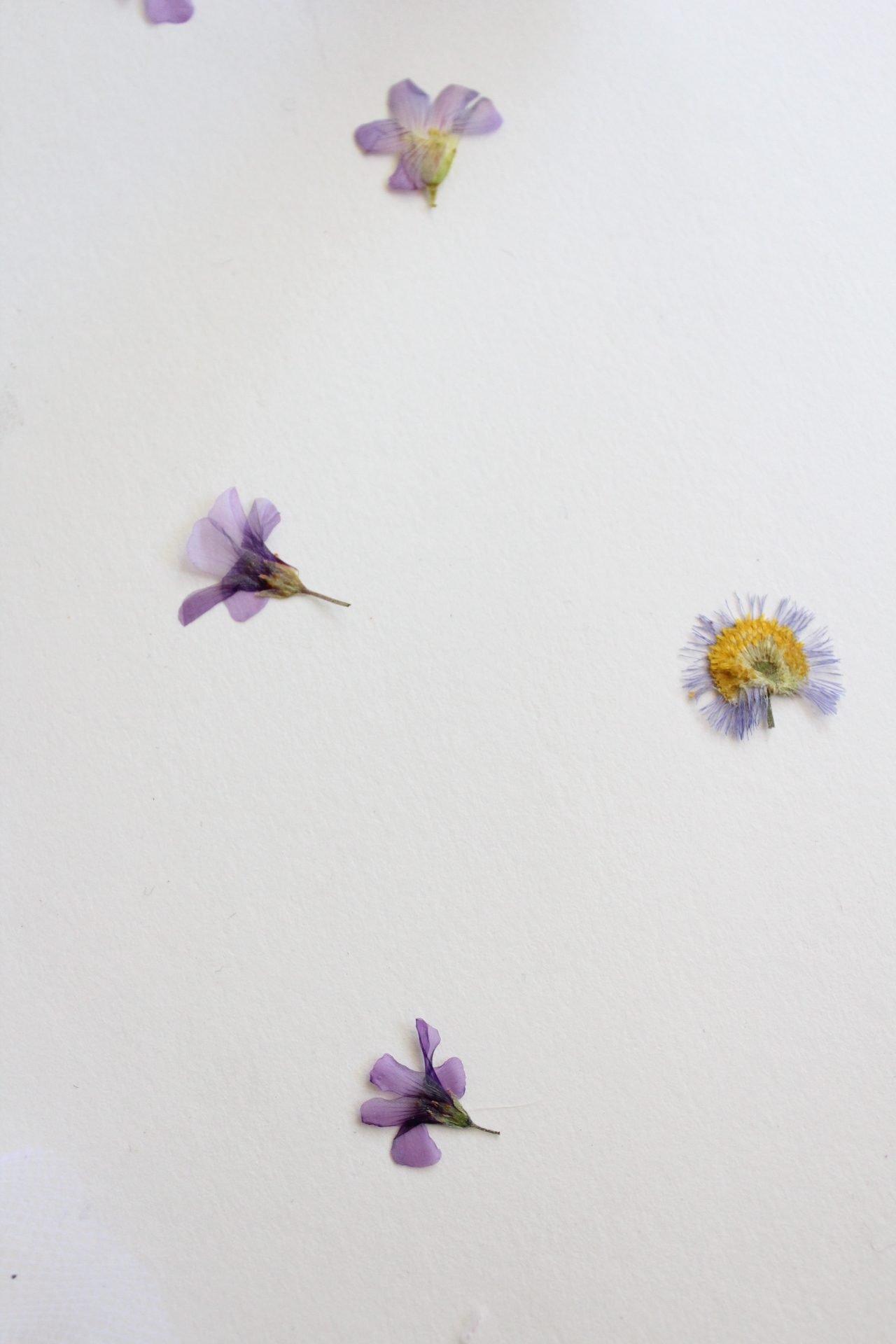 pressed wildflowers